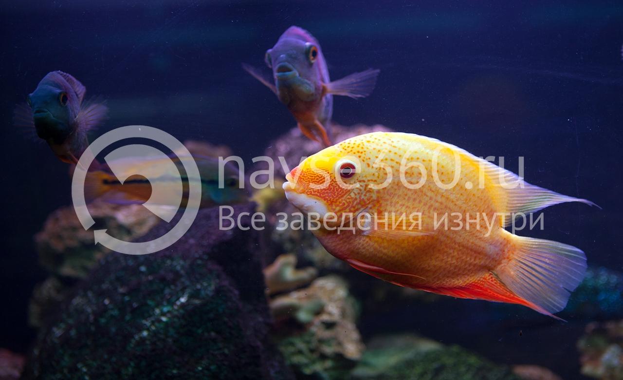 избариум, аквариум