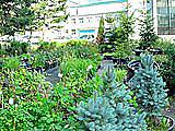 Зеленый дворик, садово-парковый центр