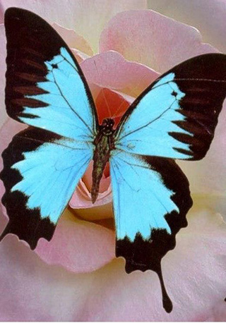 Контактная выставка экзотических бабочек и пауков-птицеедов