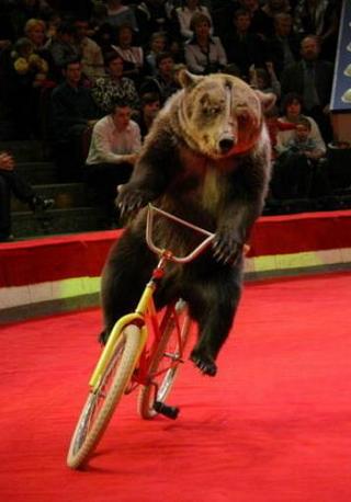 Новый год и цирк зверей