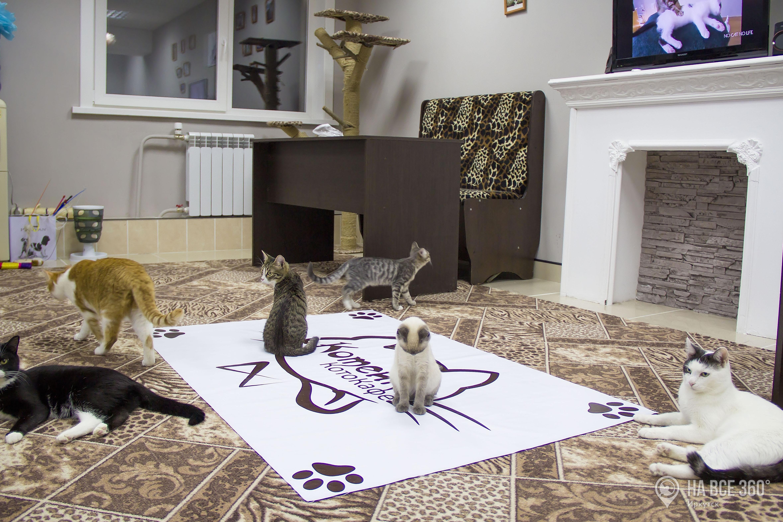 Кошки, с которыми можно играть